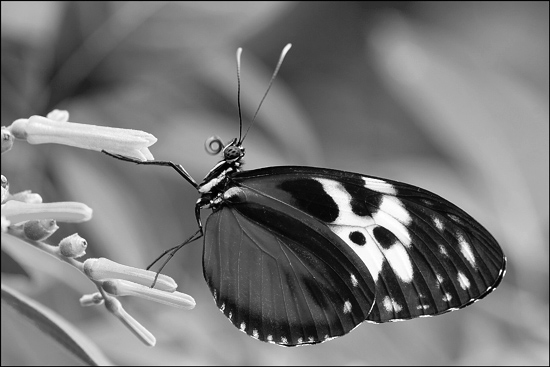 black and white pictures of nature